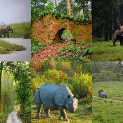 Forest and Wildlife of Dooars