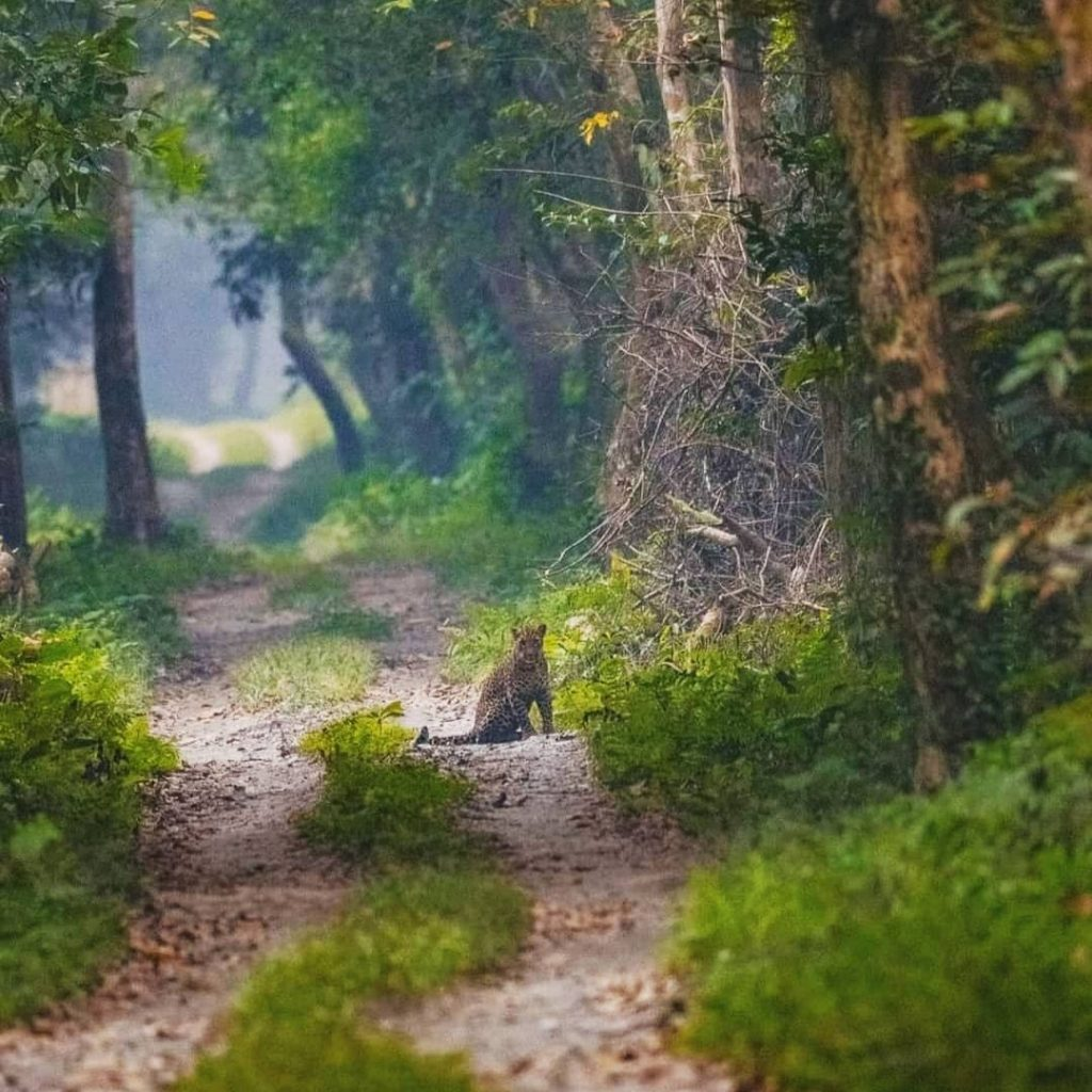Leopard spotted in Buxa Tiger Reserve