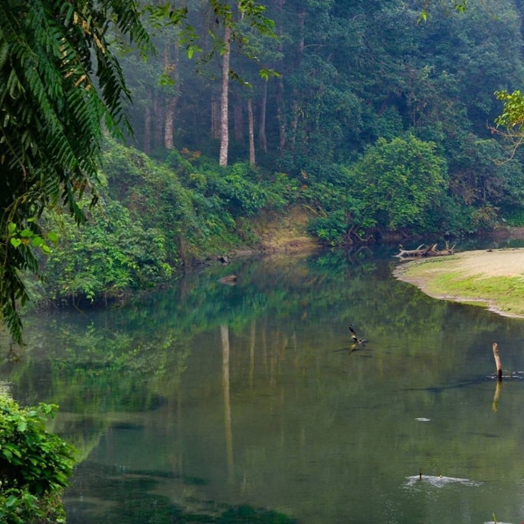 River flowing through Chilapata forest