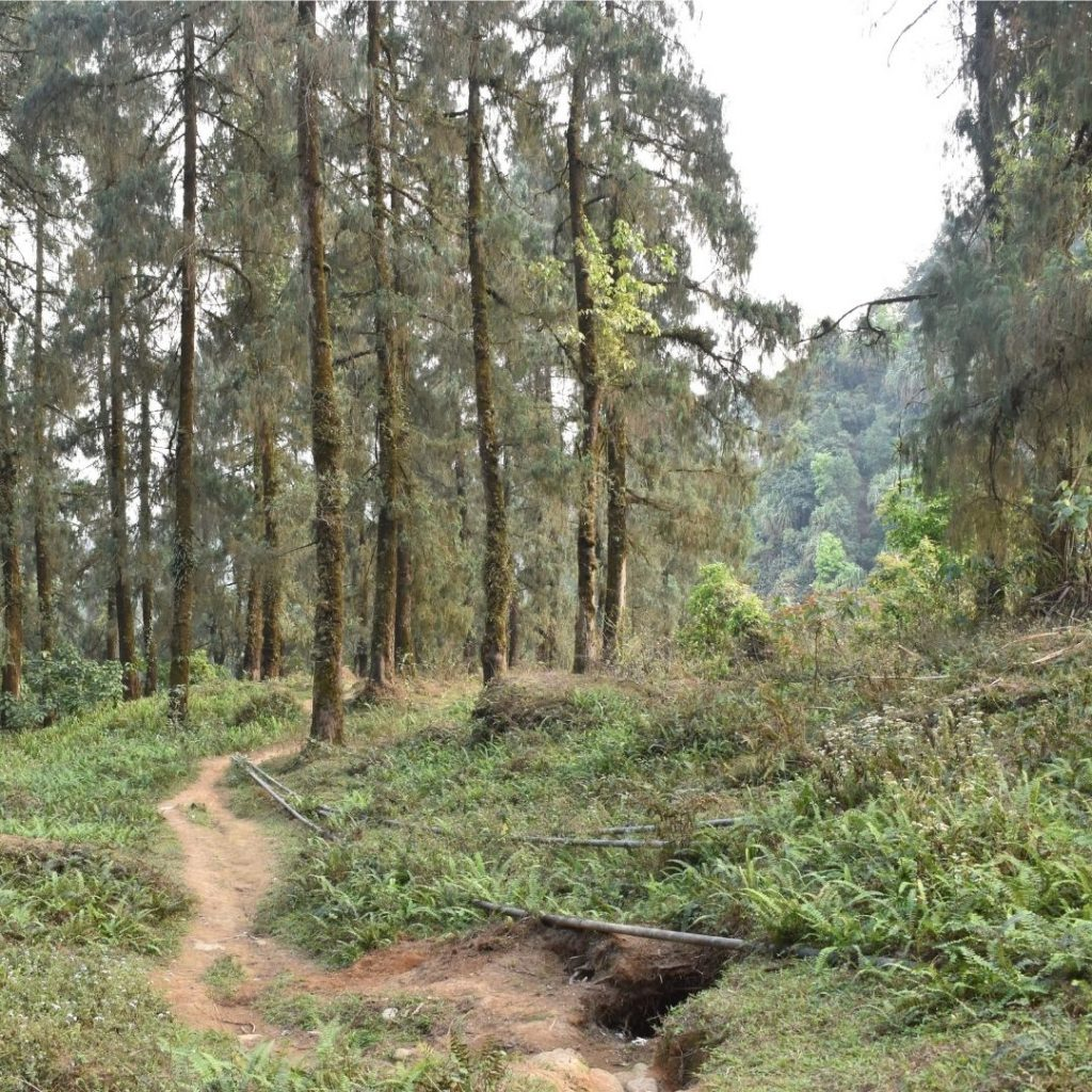 Rongo Forest