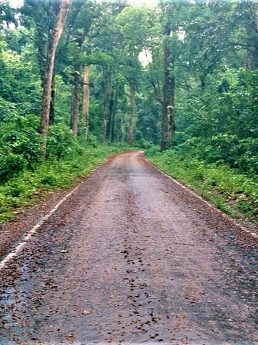 Road through the dense forests of Dooars - ডুয়ার্স